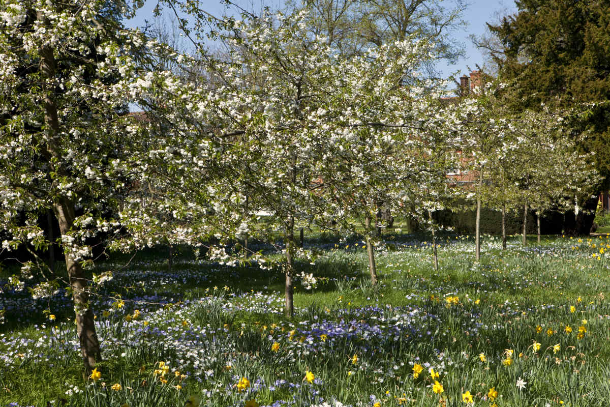 Memorial Orchard with spring bulbs